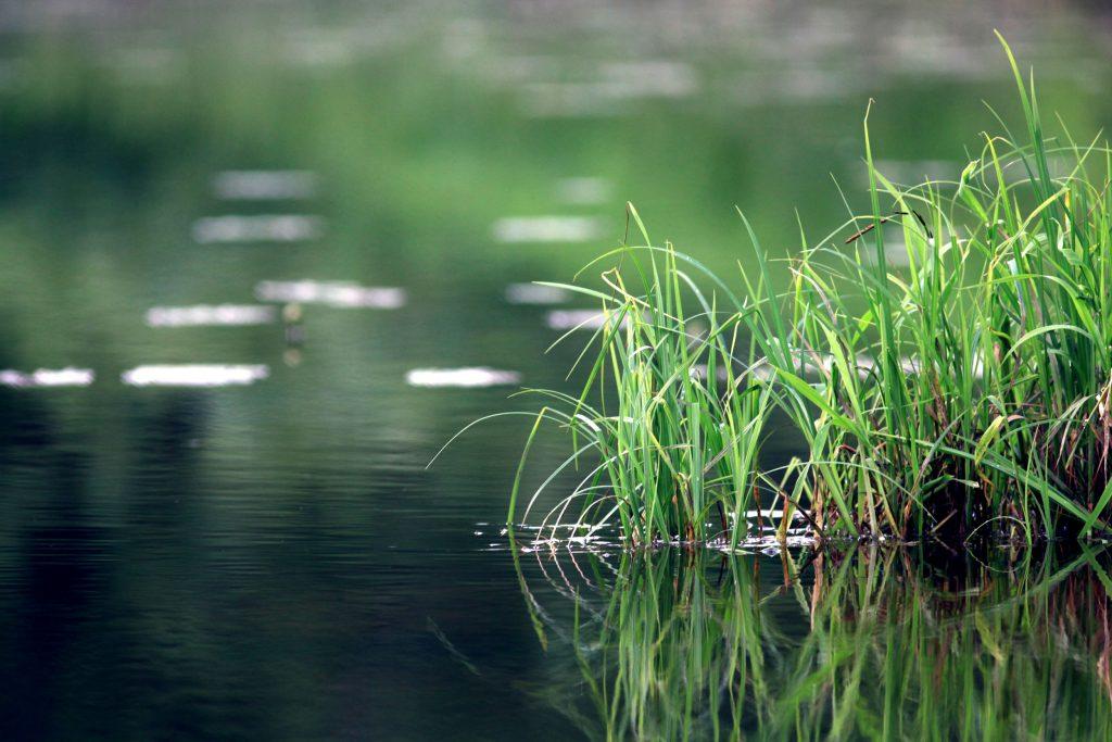 étang avec des plantes aquatiques